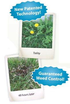 Fiesta Weed Control Available in Ottawa